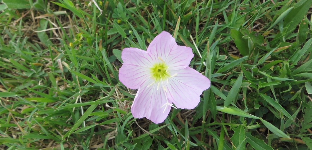 wildflowers-019.jpg