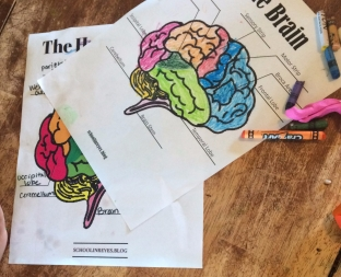 The Human Brain PFD