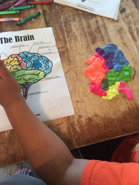 Parts of the brain, clay play